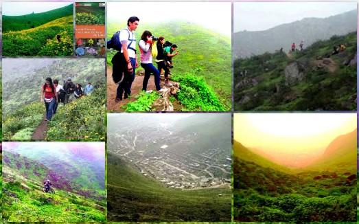 Las Lomas de Lima son un hermoso ecosistema de flora y fauna en los cerros de nuestra ciudad.